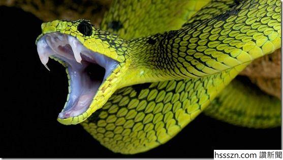 Snake_thumb_557_315
