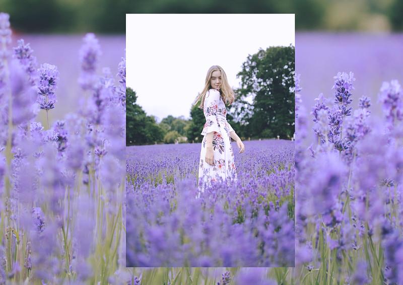 lavender dreams 4