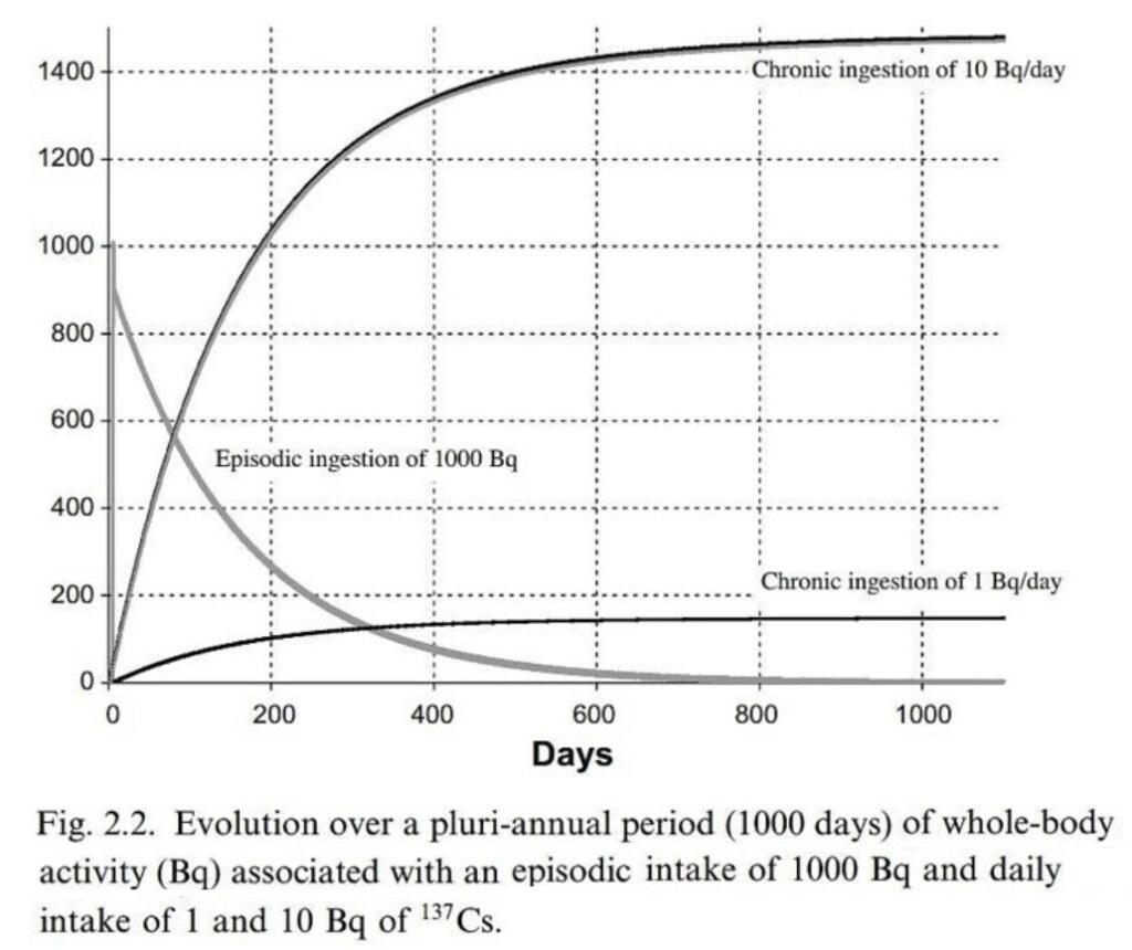 國際放射線防護委員會111公報第21頁:如狀況一,每天吃進10貝克,約在250天左右時,體內會累積至1200貝克,最後超過1400貝克;每天吃1貝克,累積至最後會接近200貝克。