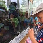 állatkertes2