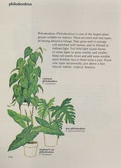 houseplants_page_scan