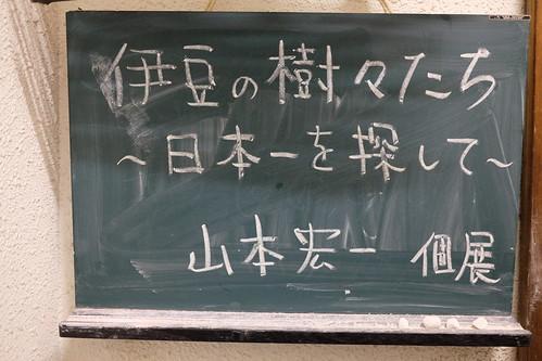 伊豆の樹々たち〜日本一を探して〜