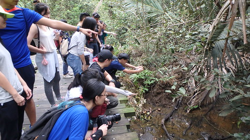 Sharing Chek Jawa and Ubin with Youth Corps Singapore