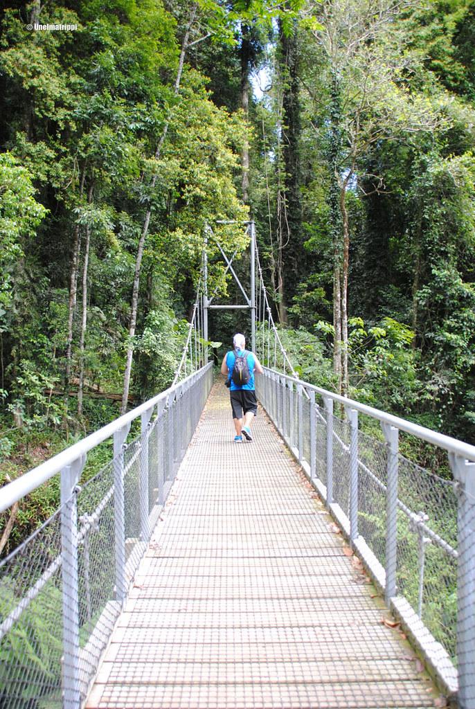 Hemmo Dorrigon kansallispuistossa, Australiassa