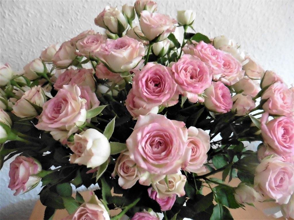 Beautiful Roses   43rd wedding anniversary   Hannelore Becher   Flickr