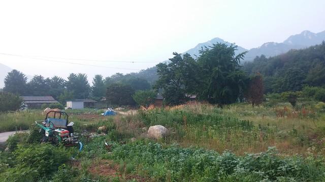 비온뒤 아침풍경
