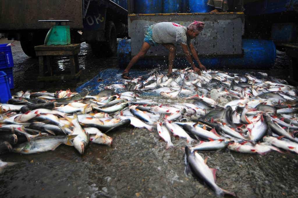聯合國盼國際合作重建漁藏。圖片來源:UNFAO