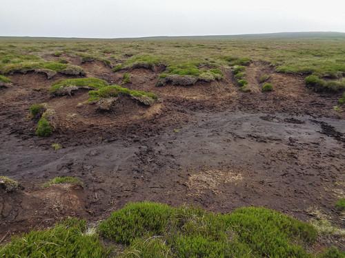 Muddy groughs