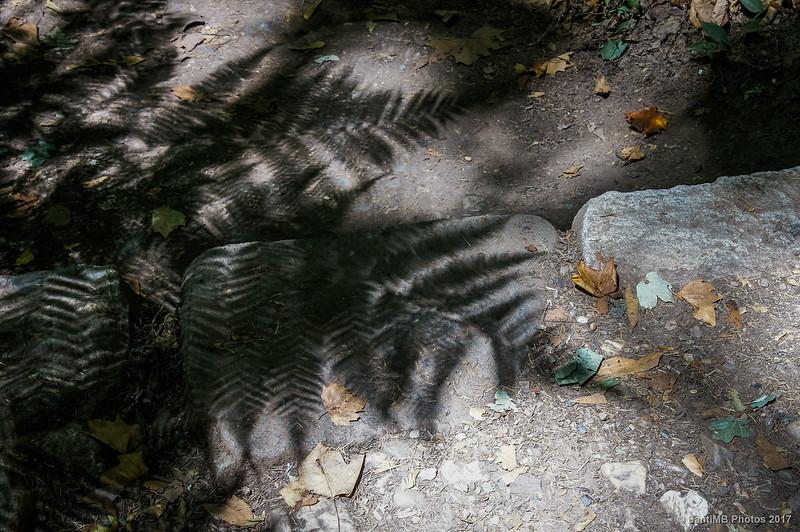 Sombra de fronda de helecho en el Vale dos Fetos de Buçaco