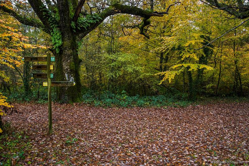 Cruce de senderos en el bosque de los Robles Milenarios