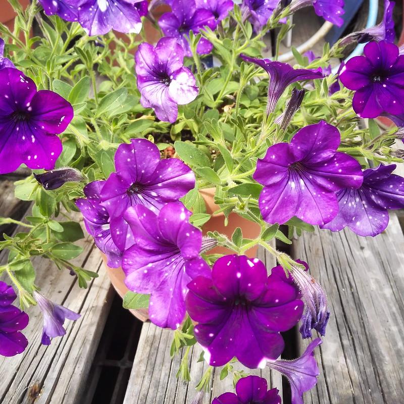 白い斑点の花