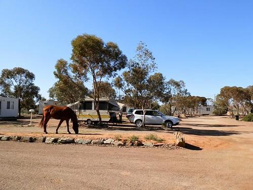 Copley Caravan Park, Outback South Australia