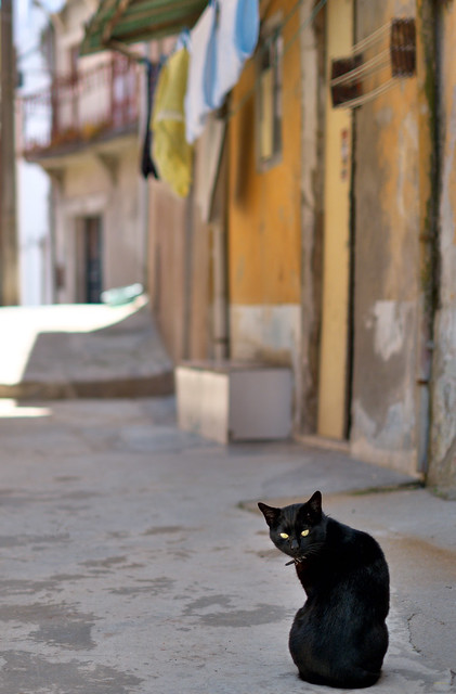 A Street Cat with Desire