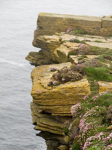 Marwick-Head-Naturreservat