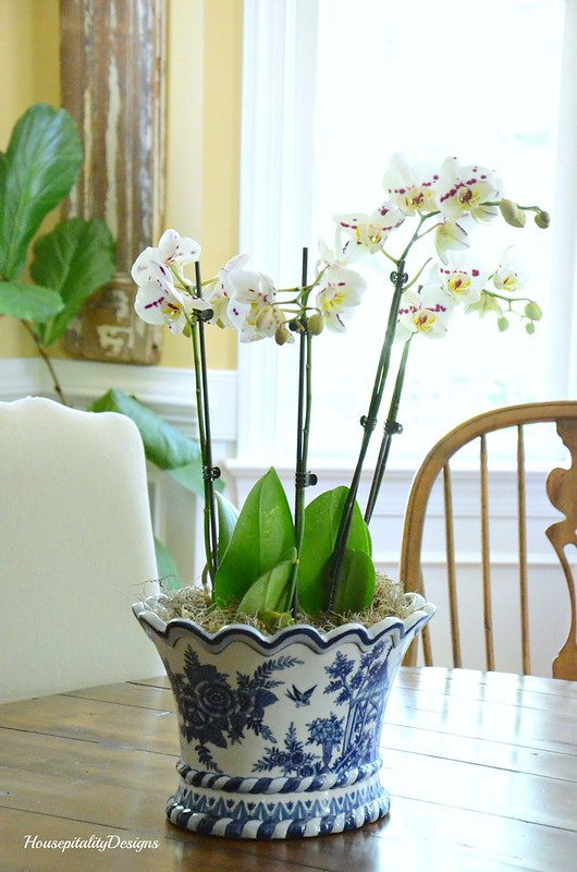 Orchid in Blue and White-Housepitality Designs
