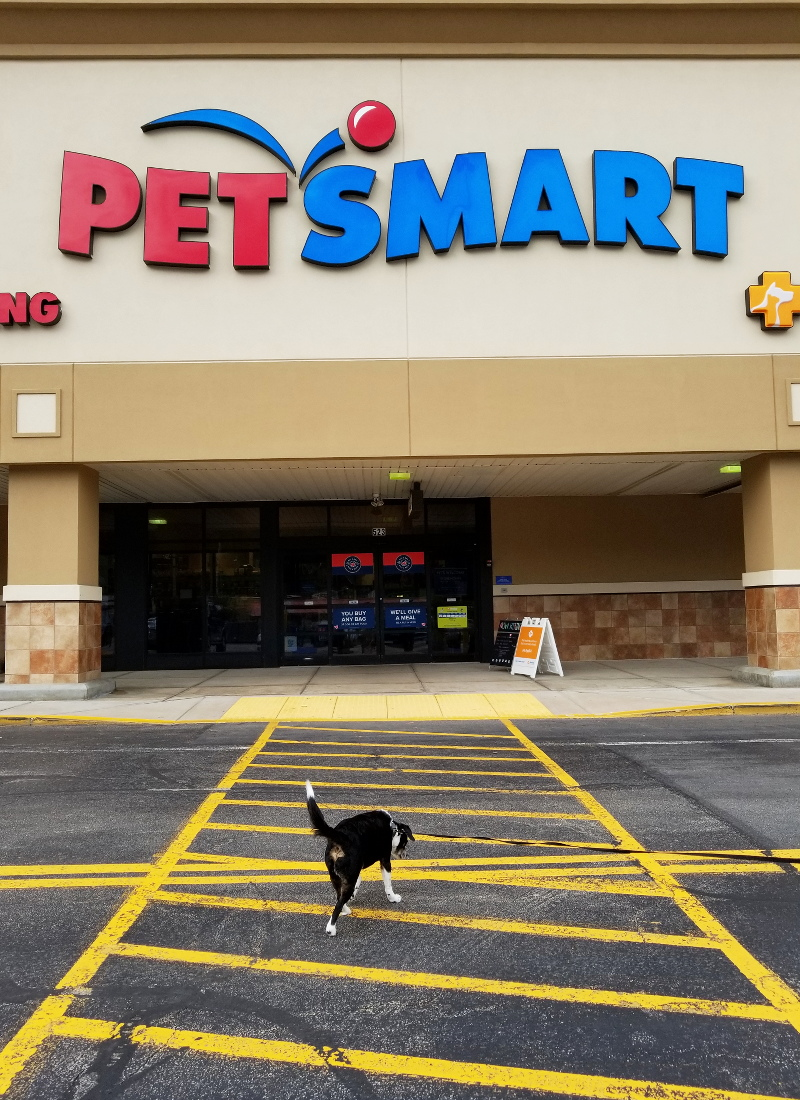 louis-beagle-dog-petsmart-shopping-trip-1