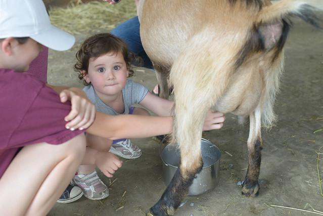 goat farm-69