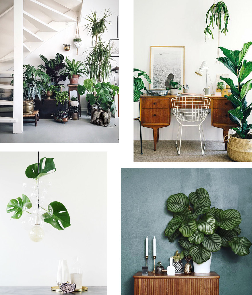 indoor_plants