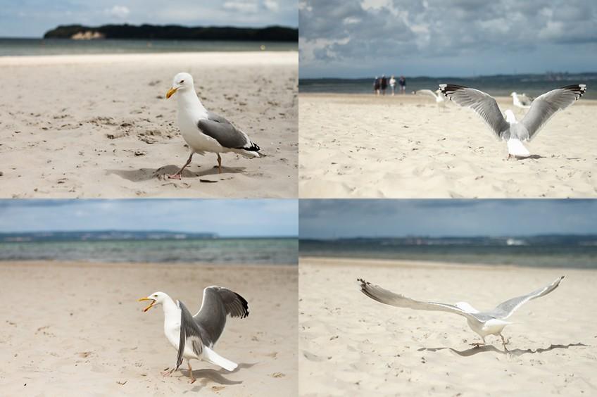 Möwe Ostsee Fotografie am Meer Strand