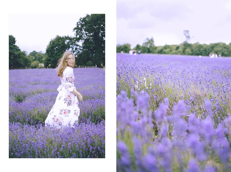 lavender dreams 3
