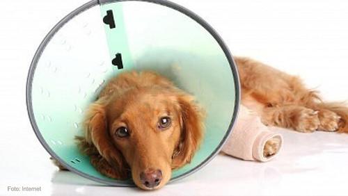 mascotas-curacion2