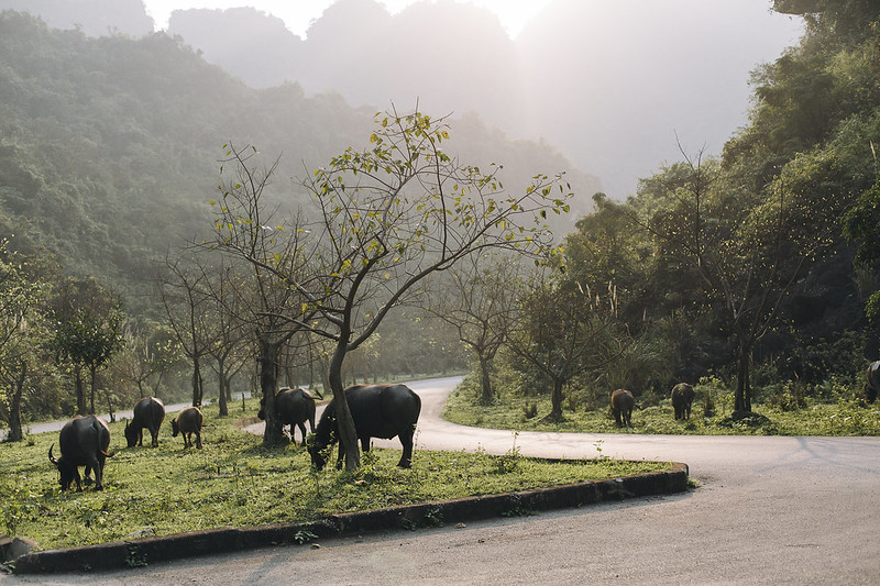 Tam_Coc_3, Ninh Binh and Tam Coc National Park, a Photo and Travel Diary by the Blog The Curly Head, Photography by Amelie Niederbuchner,