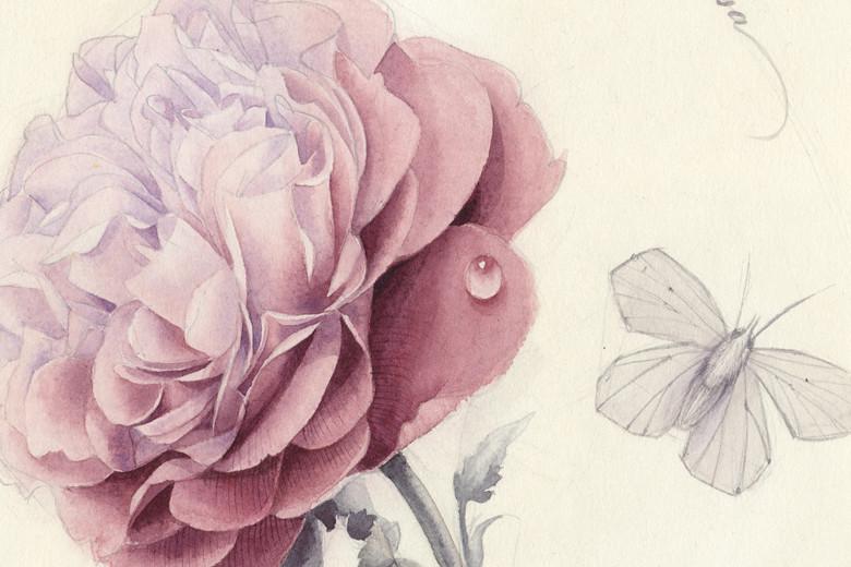 Rose_780_