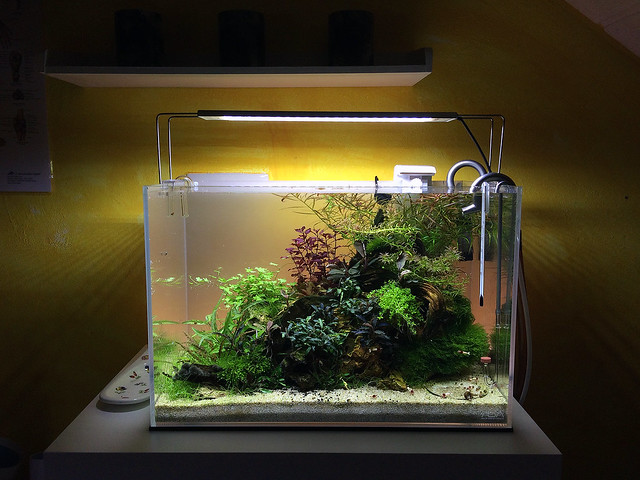 The Red Cliff Aquascape