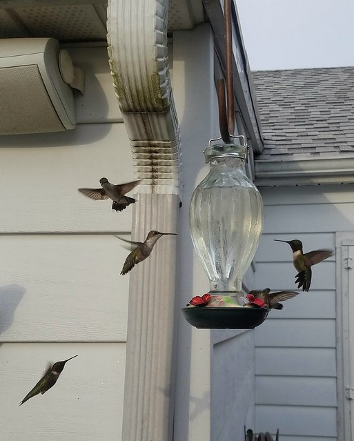 How to feed hummingbirds | Home on 129 Acres