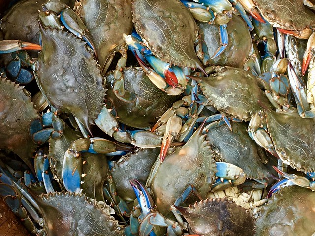 Pardon Me For Asking: Would You Eat Blue Crabs Caught In The