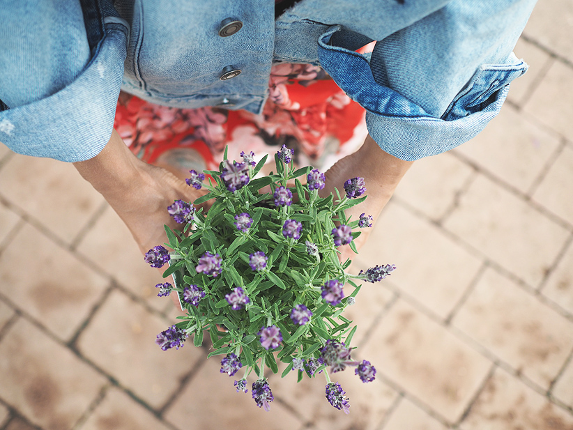 kukkamuija1