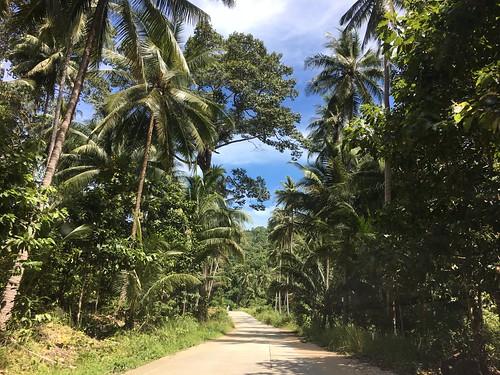 今日のサムイ島 6月8日 メナムソイ1-ラマイ峠越えロード
