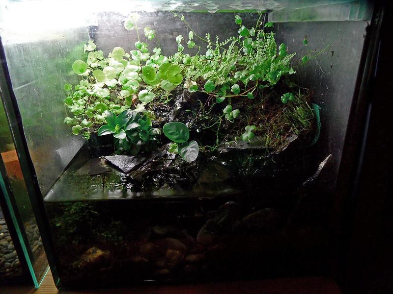 Nuevo acuaterrario - Página 4 34891358842_6f8b7d046d_c