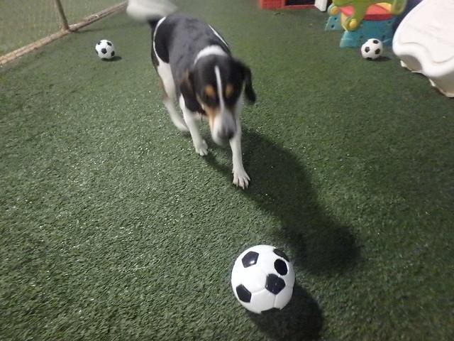 06_26_17 Soccer Play :-)