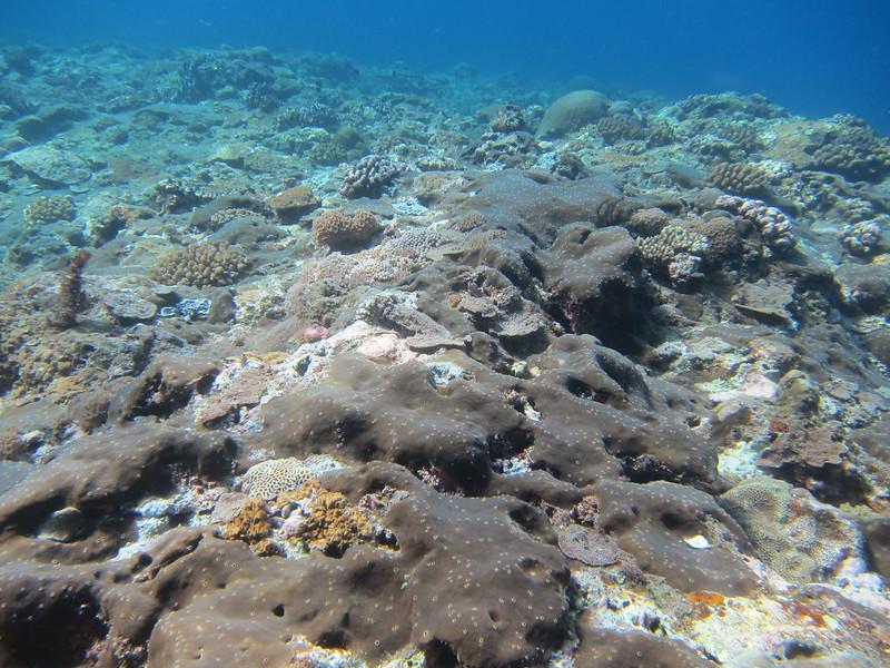 玉女岩底質上大片的蝕骨海綿。林育朱攝。