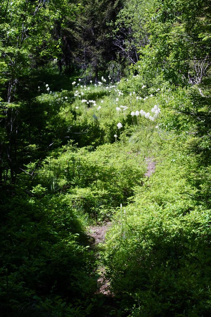 Trail 345