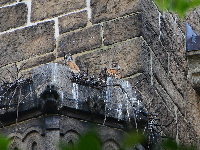 Cathedral Nestlings - 5908