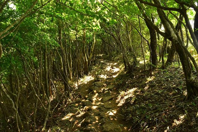 韓国岳・大浪池東回りコース 樹のトンネル