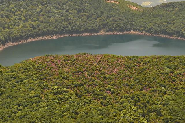 大浪池のミヤマキリシマの群生地
