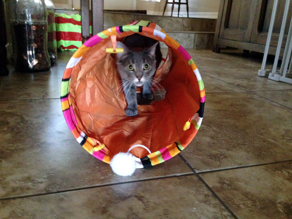 Tube kitty wife
