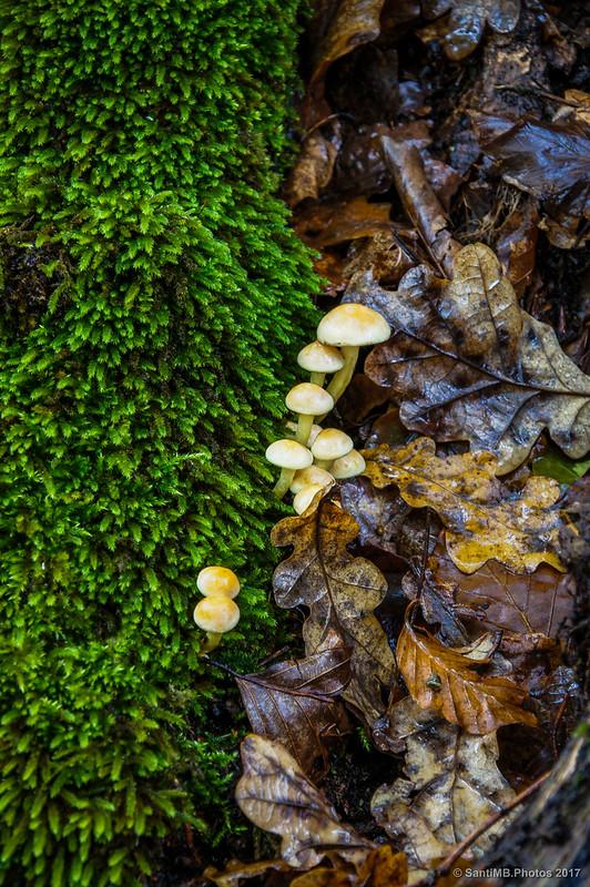 Musgo, setas y hojas secas