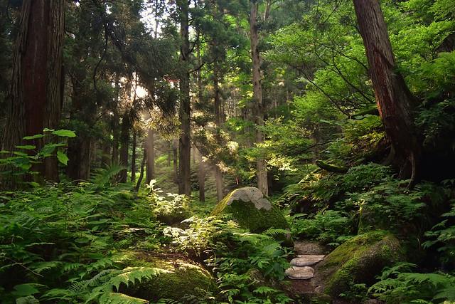 こもれび差す二王子岳の森
