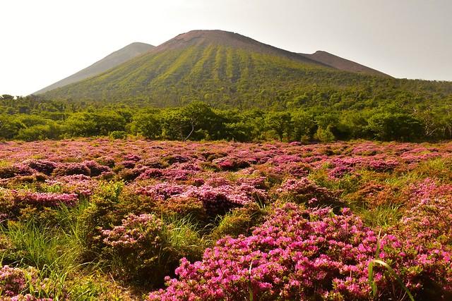 鹿ヶ原から眺める高千穂峰とミヤマキリシマ