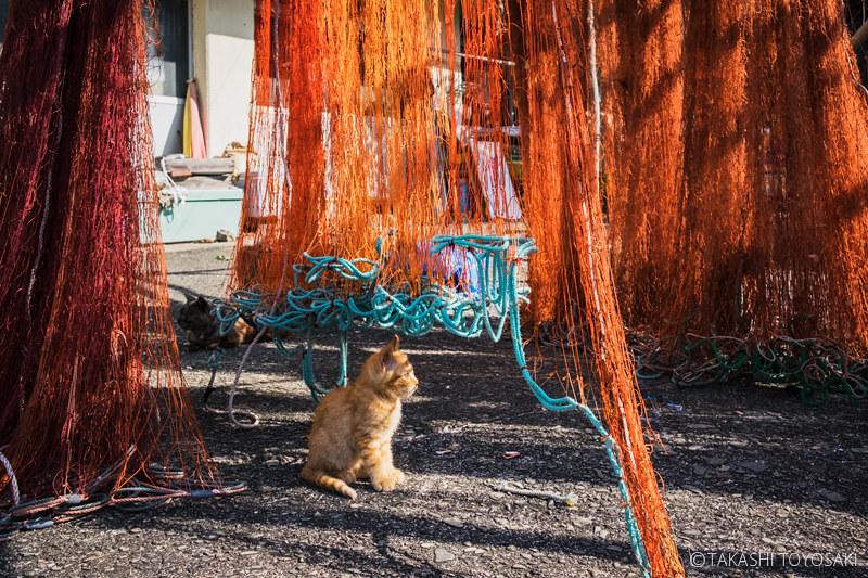 Tokushima Cat Color #262