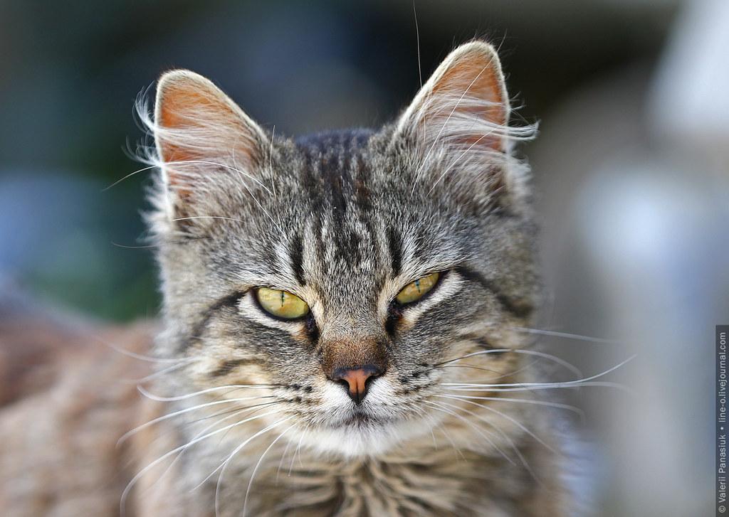 20170610_kp_cat_001