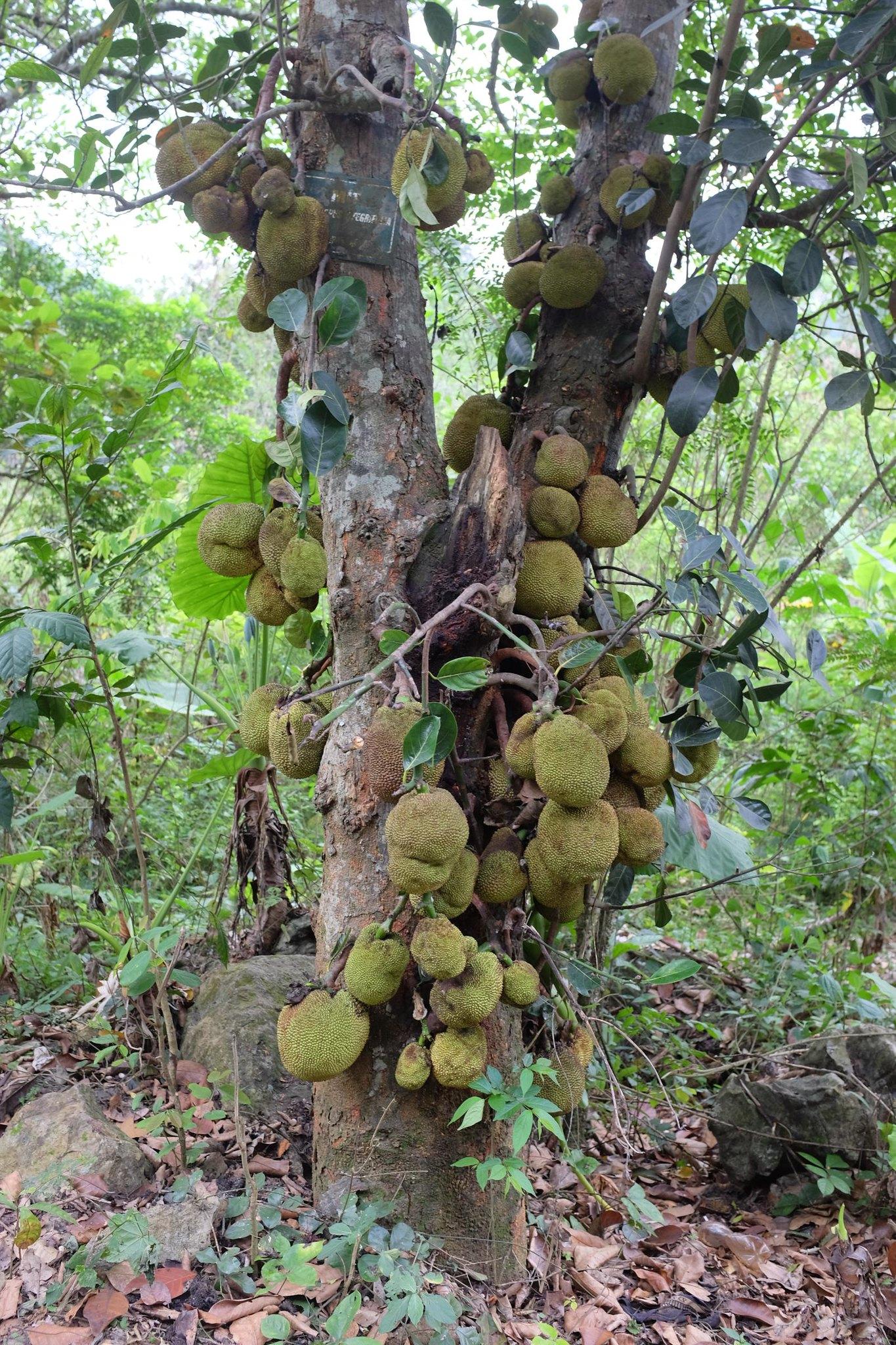 Dschungel in Vietnam