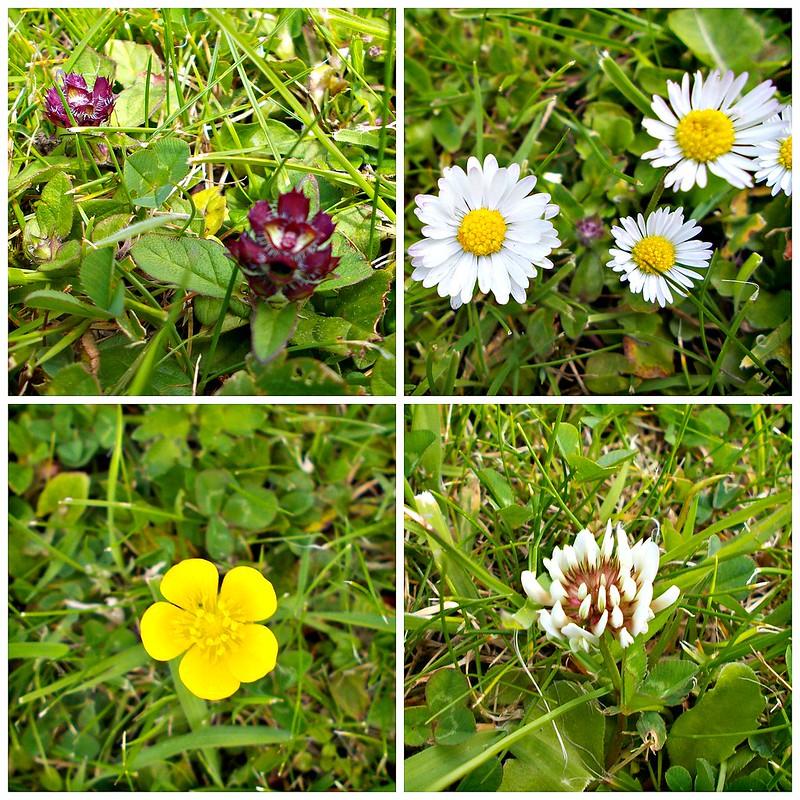 lawn flowers