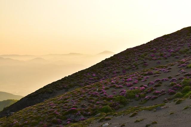 高千穂峰 朝日の光とミヤマキリシマ