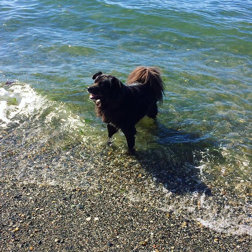 Bear Cub's favorite activity is standing on the shore and attacking Maggie when she comes out of the water.