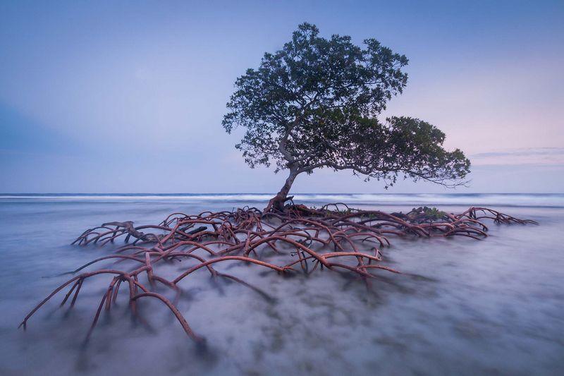 Mac Stone : Documenter les Everglades avant que cette région menacée par l'activité humaine disparaisse